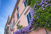 stock photo of lilac bush  - Traditional italian architecture of Pisa city with purple lilac bushes - JPG