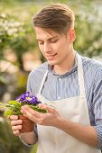 stock photo of flower shop  - Young handsome male florist holding flower pot in flowers shop - JPG