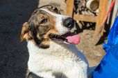 foto of homeless  - Homeless dog from a shelter for animals and people  - JPG