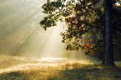 stock photo of sun rays  - early on a fall morning in rural tennessee - JPG