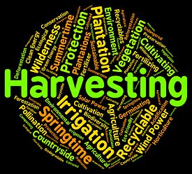 foto of gathering  - Harvesting Word Showing Produce Gathering And Gather - JPG