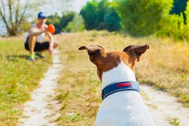 image of toy dogs  - dog and owner playing with ball toy or disc outdoors dog is waiting and ready to play - JPG