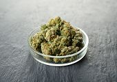 Heap of weed buds in Petri dish on grey background poster