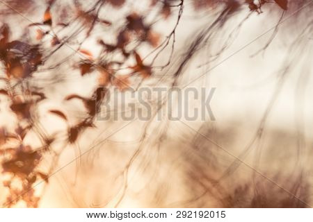 Springtime Nature Abstract Background Nature