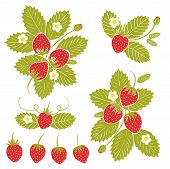 Summer Or Spring Season Frame With Strawberry, Leaves And Flowers. Decoration Element For Cards And  poster