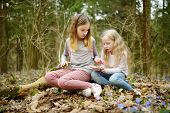 Two Cute Young Sisters Having Fun During Forest Hike On Beautiful Early Spring Day. Active Family Le poster