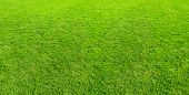 Landscape Of Grass Field In Green Public Park Use As Natural Background Or Backdrop. Green Grass Tex poster