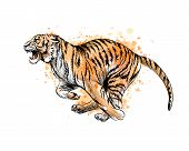Tiger Running From A Splash Of Watercolor, Hand Drawn Sketch. Vector Illustration Of Paints poster