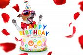 Jack Russell Dog  As A Surprise, Singing Birthday Song  Like Karaoke With Microphone ,behind Funny C poster