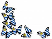 Uruguayan Flag Butterflies, Isolated On White Background