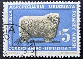 stamp printed in Uruguay shows Romney Marsh sheep