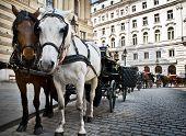 pic of hackney  - Horse - JPG