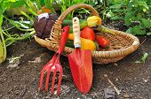 Seasonnal Vegetables With Tools