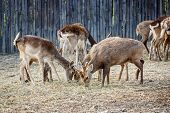 picture of deer family  - the deer family living in the zoo - JPG