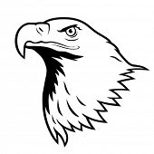 picture of bald headed  - Stylized illustration of bald eagle head - JPG