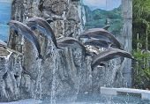 foto of grampus  - A Lot Of Dophin Jumping From The Water - JPG
