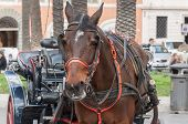 image of chariot  - chariot horse for tourist visit in spagna square in rome - JPG