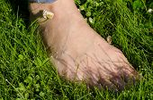 picture of wet feet  - Bare foot woman leg in early morning dewy wet meadow lawn grass - JPG