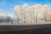 picture of snowy-road  - The winter sunny landscape frozen and snowy - JPG