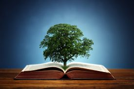 stock photo of nature conservation  - Book or tree of knowledge concept with an oak tree growing from an open book - JPG