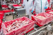 pic of slaughterhouse  - Workers taking the lumps of meat in a container - JPG