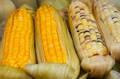 stock photo of corn-silk  - Two varieties of corn on the cob partially shucked for display are arranged at a street vendor - JPG