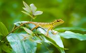 foto of lizard skin  - Curious forest lizard resting on a green leafy plant and keeping watch on his surroundings in a wilderness area of Thailand - JPG