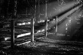 foto of moonlight  - Black and white image of a wooden fence in the woods at night lit by Moonlight - JPG