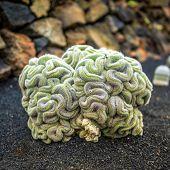 picture of cactus  - View of cactus garden - JPG