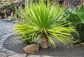 image of cactus  - View of cactus garden - JPG