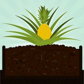 stock photo of microorganisms  - Pineapple tree - JPG