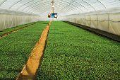 foto of greenhouse  - Organic greenhouse - JPG