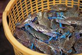 stock photo of blue crab  - Traditional asian fish market stall full of famous cambodian blue crabs - JPG