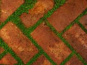 picture of gap  - Red shaded bricks with diagonal pattern with gaps filled by leafy green growth - JPG