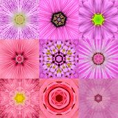 picture of kaleidoscope  - Collection of Nine Pink Concentric Flower Mandalas - JPG