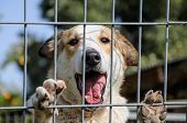 stock photo of forlorn  - Closeup of a dog looking through the bars of a fance outdoor - JPG