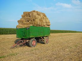 picture of hayride  - Hay bales stacked on a green trailer in a farmer - JPG