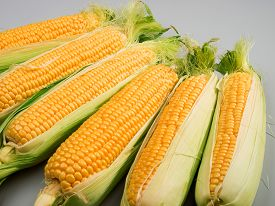 pic of sweet-corn  - Raw sweet corn shot over gray background - JPG