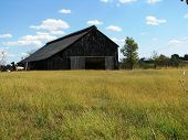 picture of tobacco barn  - Burley hangs to dry in a Kentucky tobacco barn - JPG