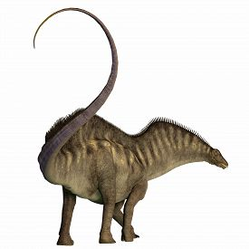 foto of herbivore  - Amargasaurus was a herbivorous sauropod dinosaur that lived in Argentina during the Cretaceous Era - JPG