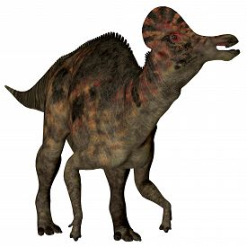 image of herbivore  - Corythosaurus is a herbivorous duck - JPG