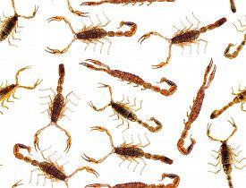 pic of scorpion  - macro photo of  scorpions seamless background - JPG