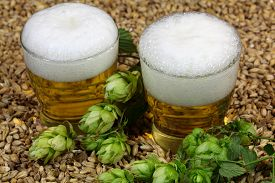pic of malt  - Two glasses of beer with malt and hops - JPG