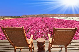 foto of buttercup  -  Two chaise lounges for rest stand on a scaffold at a picturesque flower field - JPG