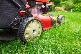 picture of grass-cutter  - Lawn mower cutting green grass in backyard - JPG