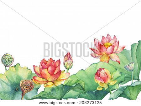Banner Border Of Pink Lotus Flower With Leaves Seed Head Bud