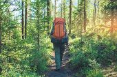 Healthy Active Man With Backpack Hiking In Beautiful Mountain Forest In The Summer In The Sun poster