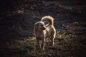 Image Of Brown Cute Stray Dog In Grass Field On Day Time . poster
