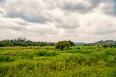 Tropical Landscape On Cloudy Sky In Boca De Valeria, Brazil. Green Trees On Summer Meadow, Tropical. poster