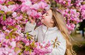 Child Enjoy Warm Spring. Girl Enjoying Floral Aroma. Kid On Pink Flowers Of Sakura Tree Background.  poster